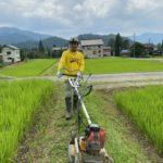 南魚沼産コシヒカリ草刈り作業